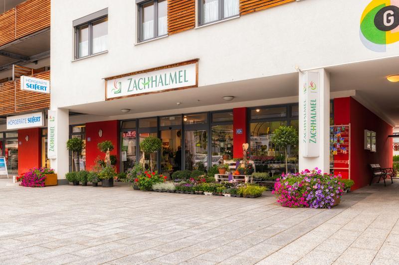 Zachhalmel
