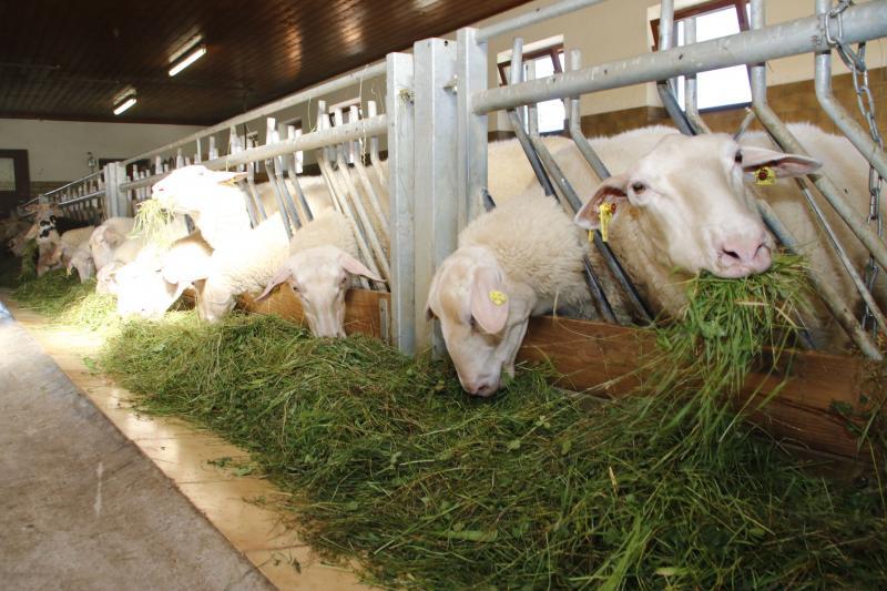 Bio Bauernhof Geyerspichl -  Produkte vom Milchschaf
